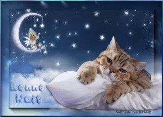 Buona notte a tutte 😍 https://t.co/LTMAc...