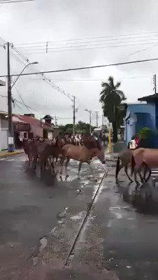 RT @paulacamara_: Caravana petista indo para Porto Alegre https://t.co/zubmlj9p76
