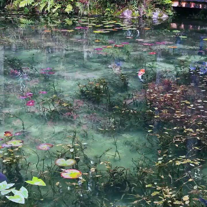 岐阜県関市にあるモネの池Credit:Saneer Rayani