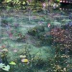 岐阜県にあるモネの泉が綺麗すぎる日本のものとは思えない綺麗さに注目!