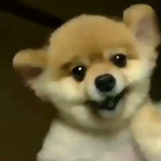 同僚の知り合いから送られてきたっていう歯の近況情報の動画がホンマに意味分からんすぎてクソ笑ってる