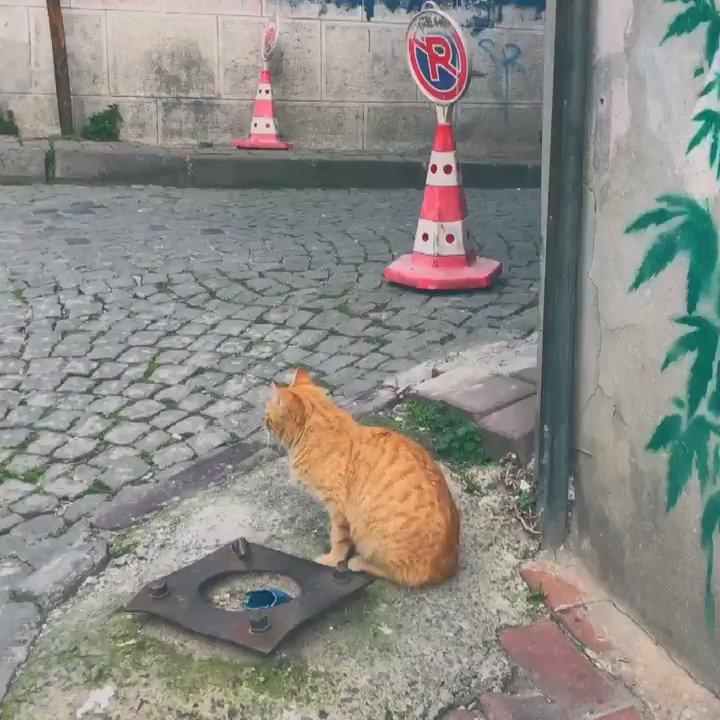 突然ですが、私がイスタンブールで出会った猫20匹をまとめたのでお暇な時にどうぞ