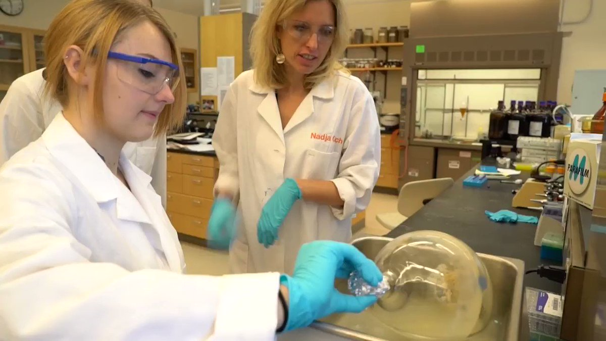 Check out the first in a series of faculty spotlight videos for the UNCG Department of Chemistry & Biochemistry, featuring Dr. Nadja Cech and her research group