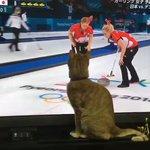 カーリングお手伝いしてる猫。最後に石が画面を飛び出してきたと思ってこっちみてる
