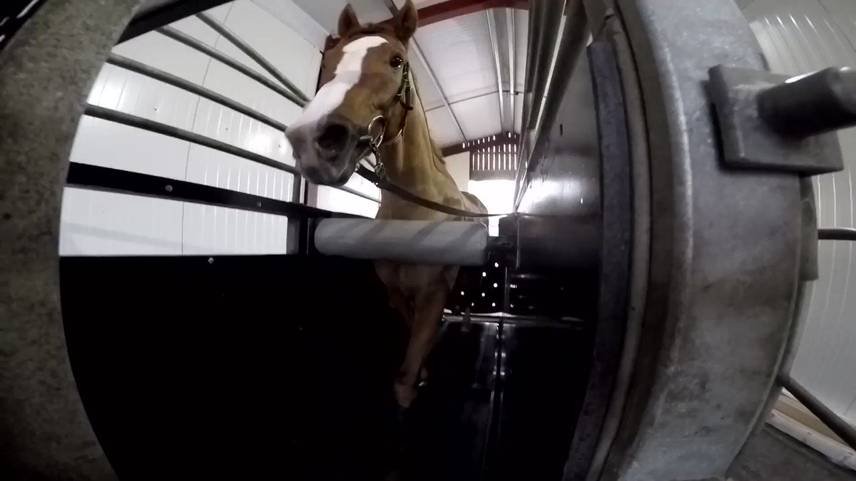 #DidYouKnow you can train a horse on a treadmill? Rene Mathis @RichardFahey shows us how its done on our Malton outing earlier in the week