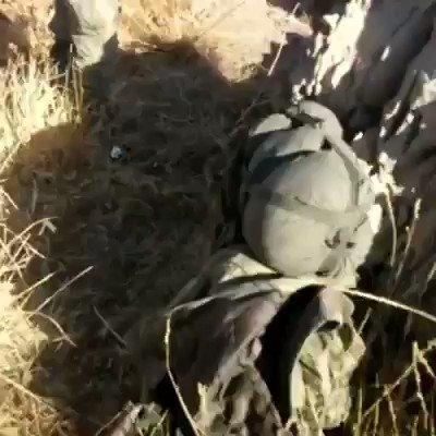 Esto es lo que esta pasando en #Afrin tr...