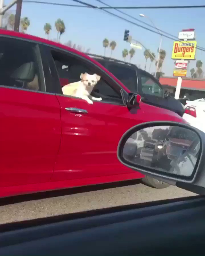 This dog knows what's up 🔥🔥 https://t.co...