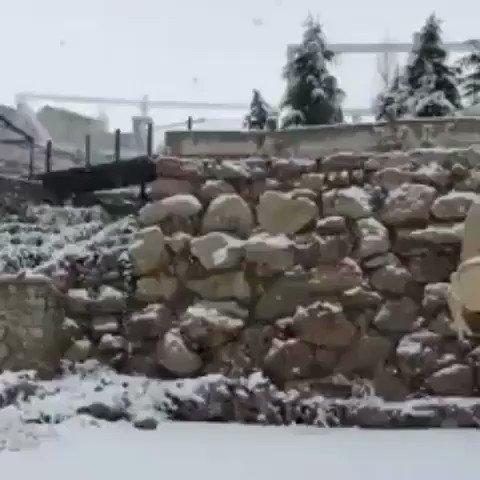 ألا برؤية الثلوج تصفى القلوب✨🌿 https://t...