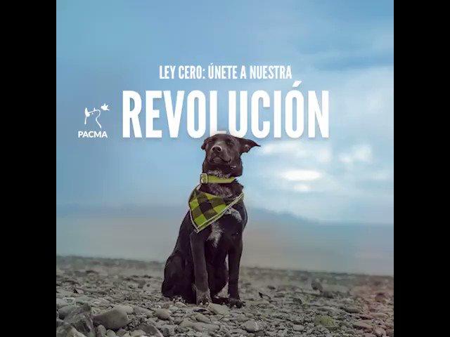 ¡La revolución social de los animales ha...