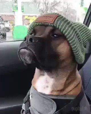 Quando o cachorro parece rapper https://...