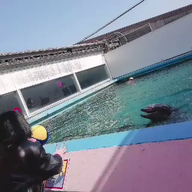 momo playing with k-onces/j-onces and the dolphin at the back is the international onces