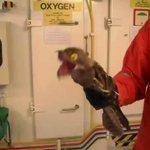 プケプケは実在した!?中南米に生息する謎の怪鳥タチヨタカの顔と声!