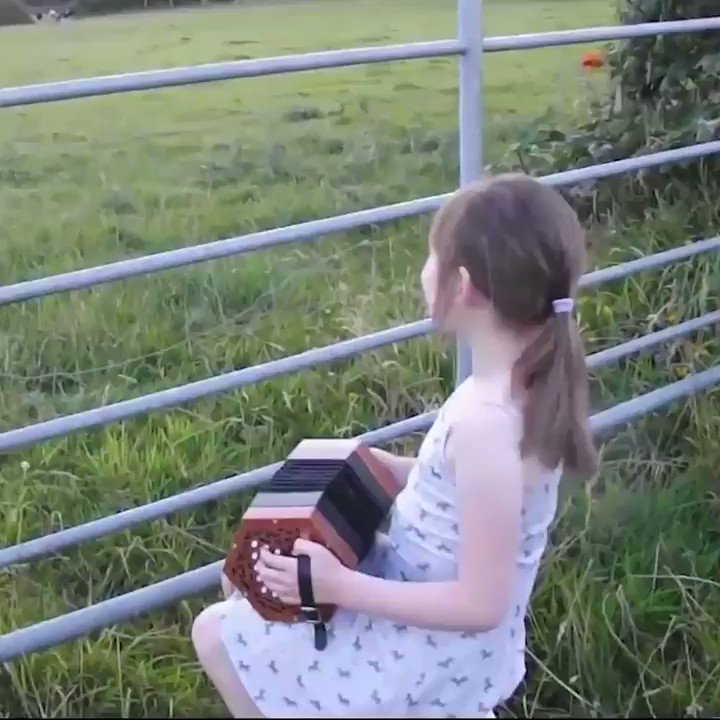 Playing til' the cows come home..🤗❤️🐮🐄🎶🎵...