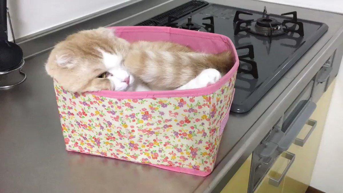 ちょっと目を離した隙に 禁止されてるキッチンにのぼり 「僕の箱だもん!」と 言わんばかりの様子のうな氏。