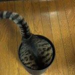 その角度から抜け出せる?!猫の驚異的な柔らかさの秘密を動画でチェック