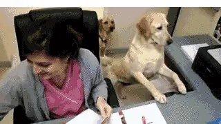 ☀😄☀😄☀😄☀😄☀😄☀😄☀ #doggies #dogsoftwitter #p...