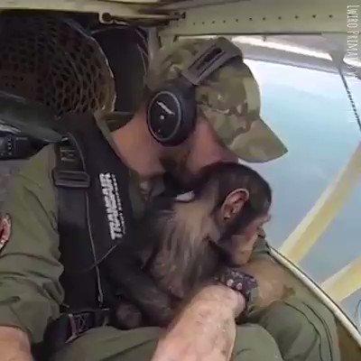 Somos primates https://t.co/R8c3Y2hF5O