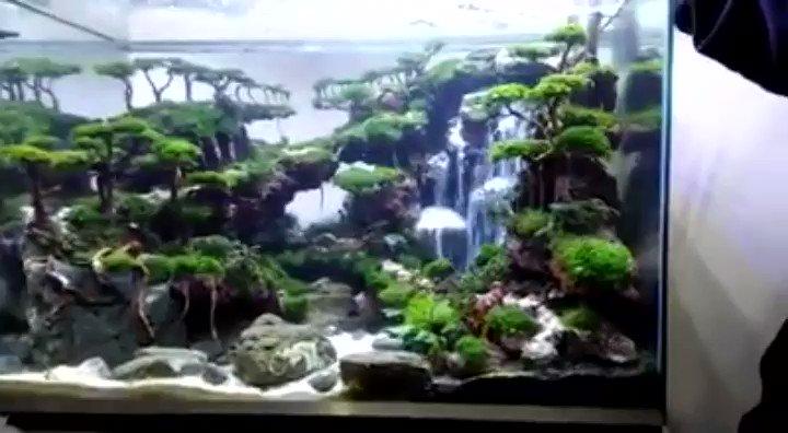 水槽の中で滝が流れる海外ガチ勢のアクアリウムすげー