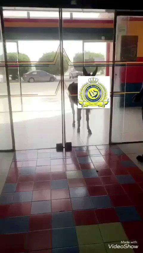 جـوزيـف ⚡️🇸🇦's photo on #الاهلي_الغرافه