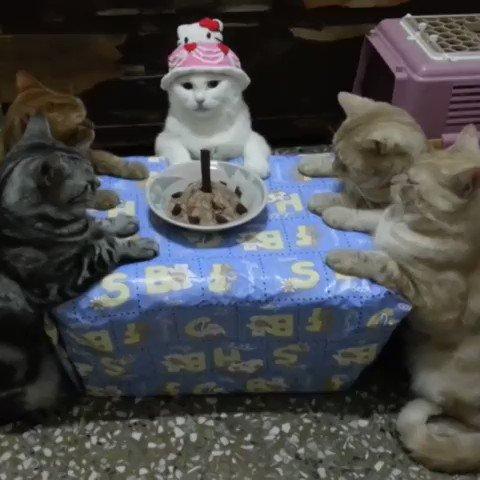 全く盛り上がらない猫のお誕生会🐱