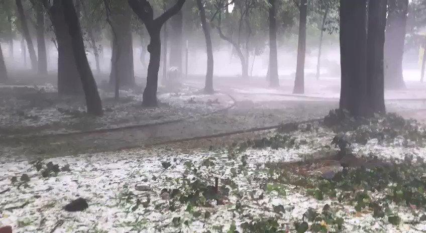 Chapultepec, #CDMX, después de la fuerte...