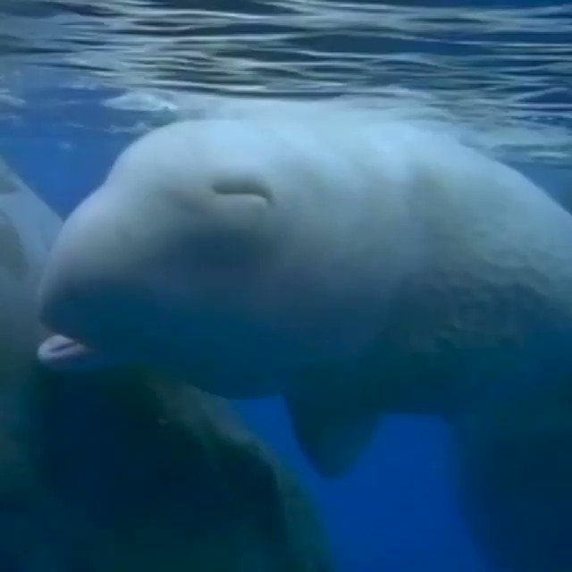 Learn how sperm whales 'talk' with accents. 📻  bbc.in/2Gtp5hy