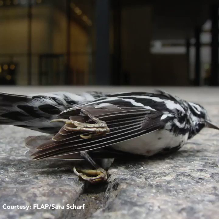 Millions of birds die in collisions with windows. How can we stop birds from crashing into buildings?