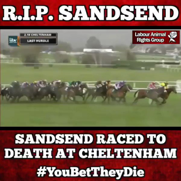 Another day and yet another beautiful horse dies after being raced to death at the #CheltenhamFestival Please RETWEET and SIGN the petition to help protect racehorses like Sandsend from abuse and death. #RIPSandsend #YouBetTheyDie bristolpost.co.uk/sport/third-ho… petition.parliament.uk/petitions/2119…