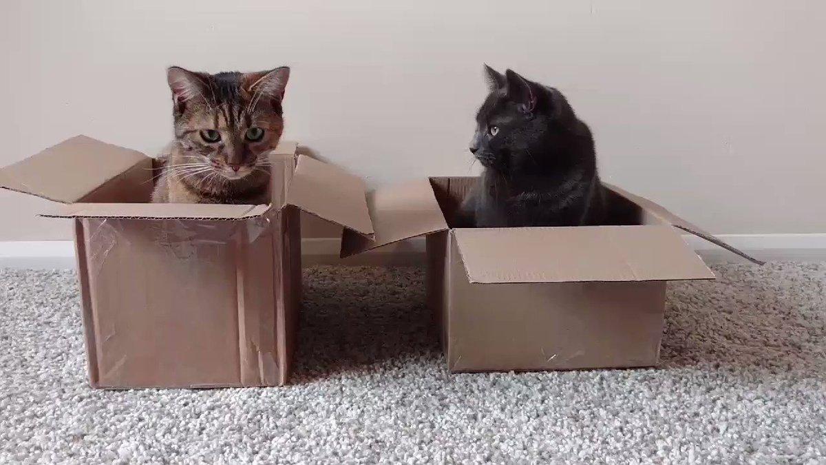 Cat trap 📦😸 #cat #CatsOfTwitter #box #ca...