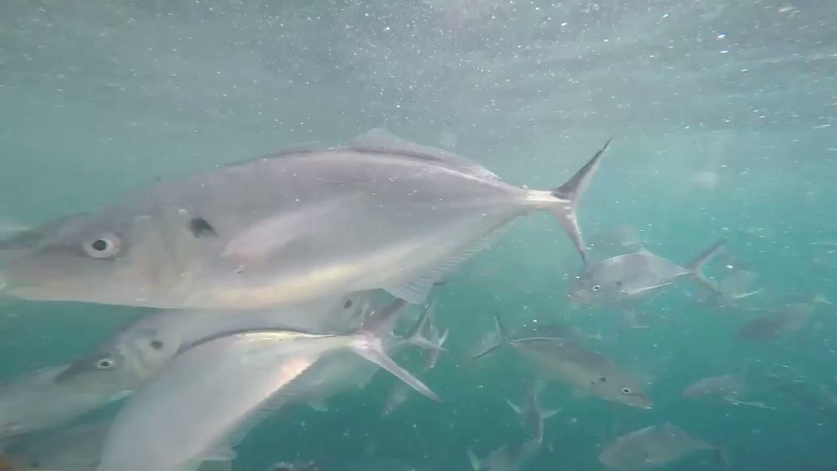 Footage from Thursday's trip by guest At...