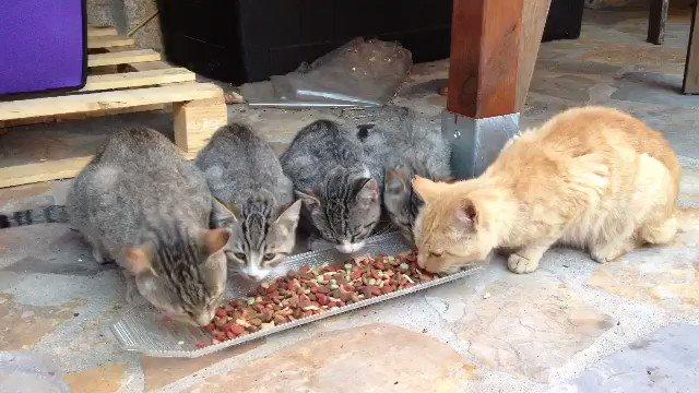 Mis callejeritos, desayunando #Gatos #Fe...