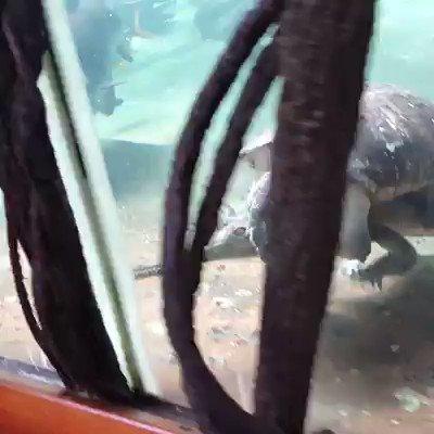 ��Les animaux sont uniques et magiques �� https://t.co/FW5k9ZLpJy