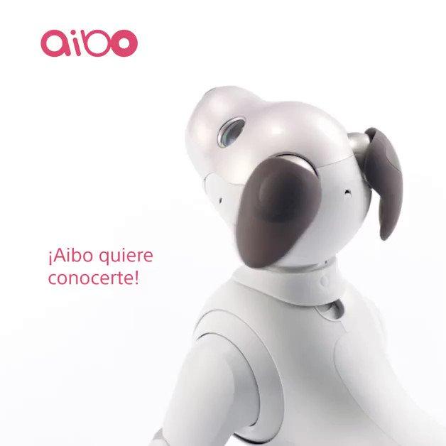 Conocé a Aibo y enamorate de su tierna mirada, capaz de decirte qué necesita. https://t.co/E7BDm5JNIN https://t.co/Dn1tZqeQ35