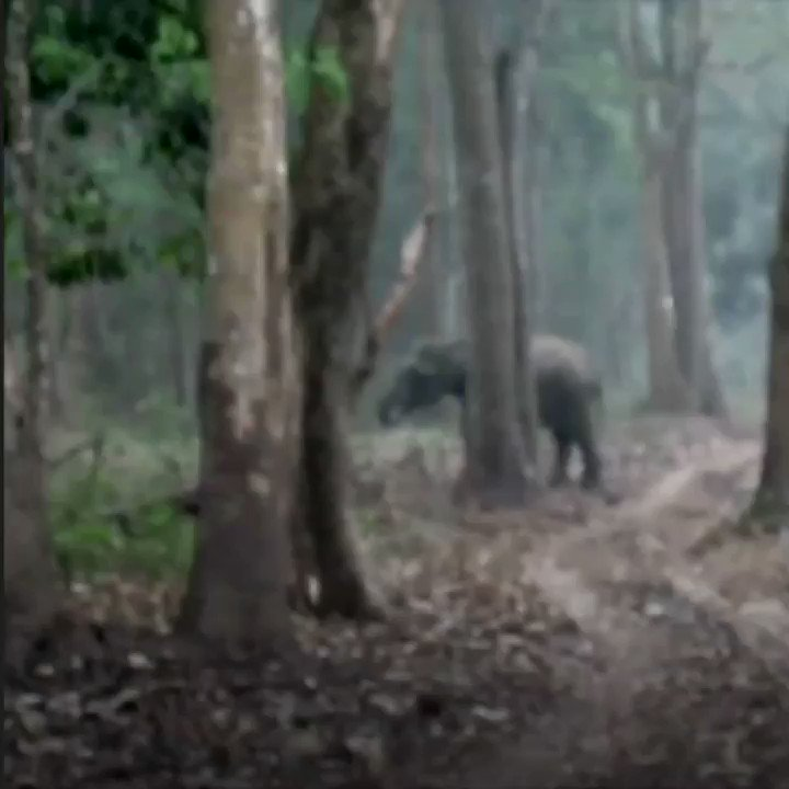 This 'smoking' elephant in India is baffling experts  https://t.co/4oBCX8OR7q https://t.co/5nVKiPNUZF