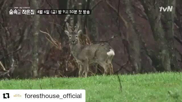 foresthouse_official IG #ASMR #version1 #closeyoureyes゚ホᄃ゚フ #₩ᆪᆴ ̄チᆴ│ヌᆰトᄊ ̄チᆴ←゚ᄈ ̄ツメ₩ト゚ ̄チリ ̄チᆭ ̄チ ̄チᆭ ̄チマ ̄チᅠ ̄チユ ̄チト゚ルネ゚ムツ゚マᄏ https://t.co/okPPuAdDvx