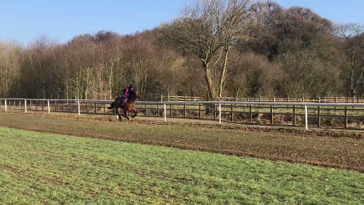 Firmament enjoying being out in the sunshine under regular rider @scottcarly97 this morning!