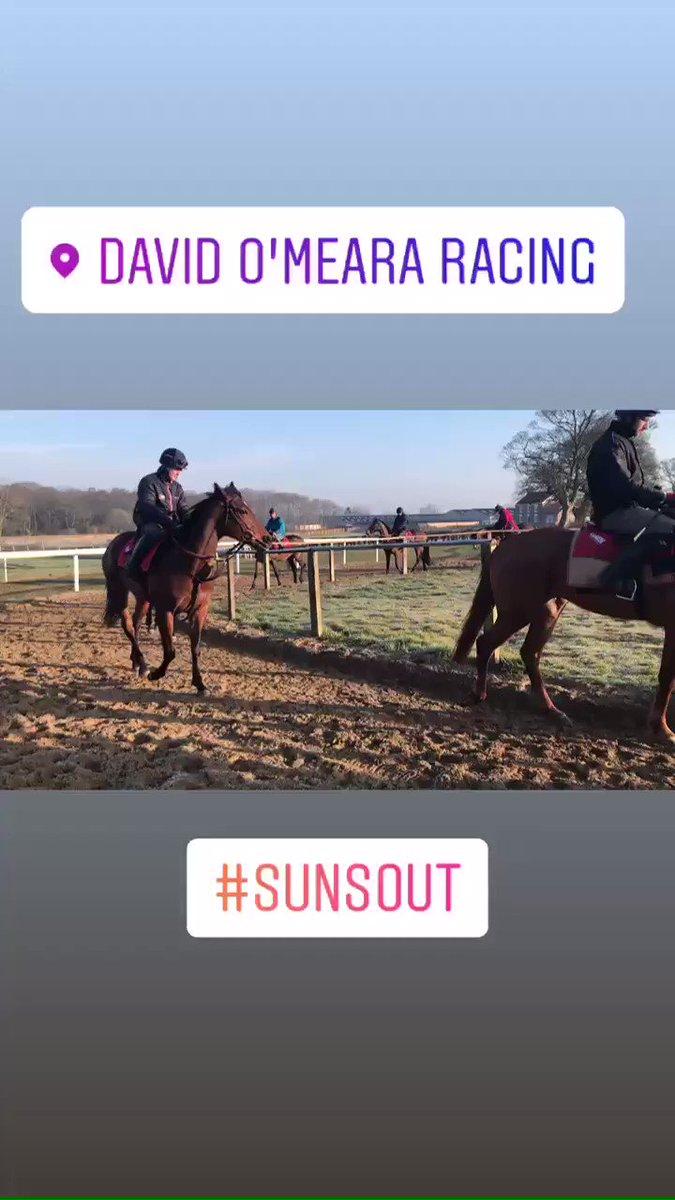 3rd lot... horses enjoying the sun on their backs!