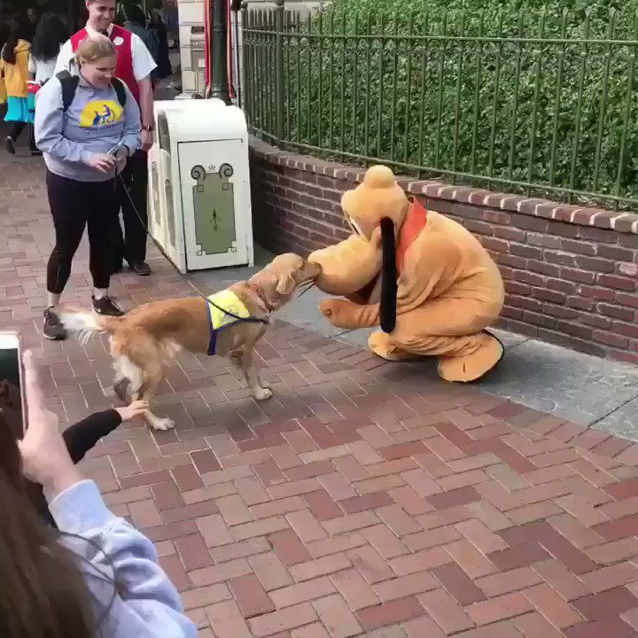 A Service Dog Meeting Pluto At Disneyland Is The Cutest Thing You'll See Today