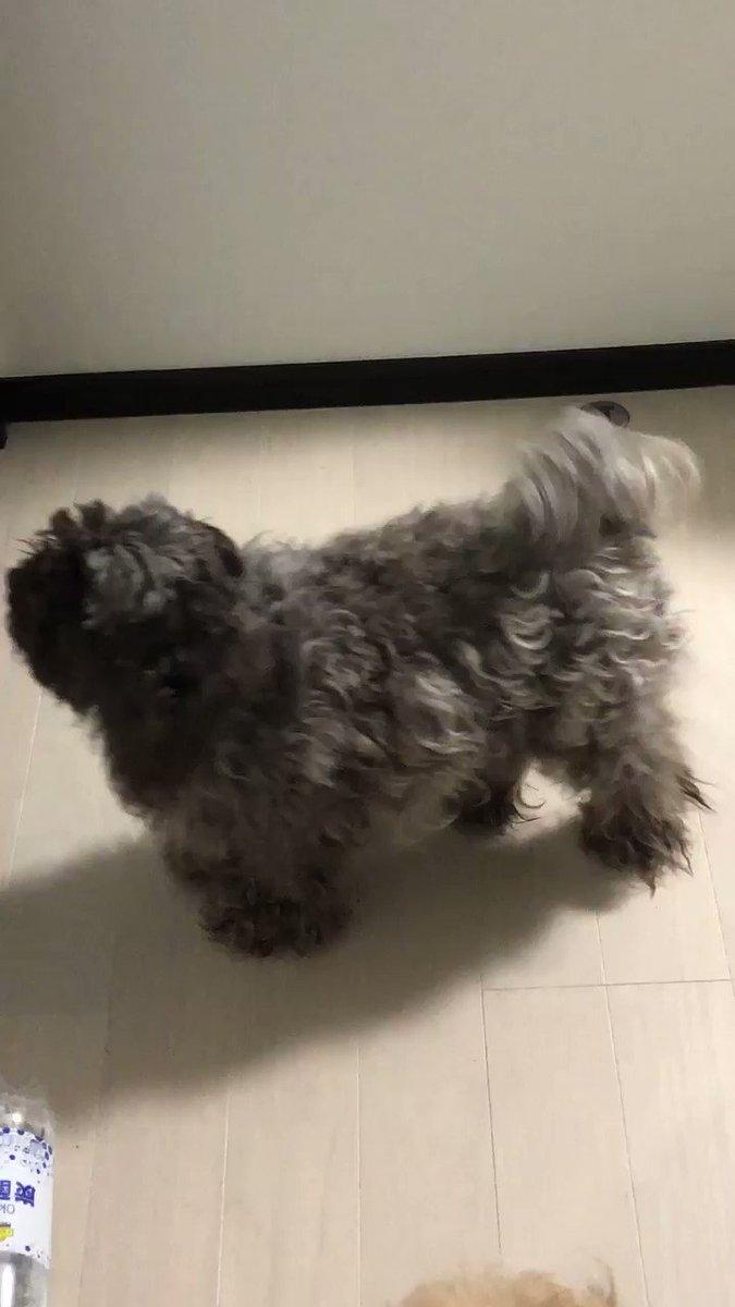 これはドアの外にいる母に会いたいチビ犬と便乗するデカ犬と倒された炭酸水