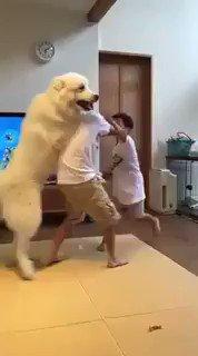 兄弟喧嘩を必死で止めようとする犬🤣ww