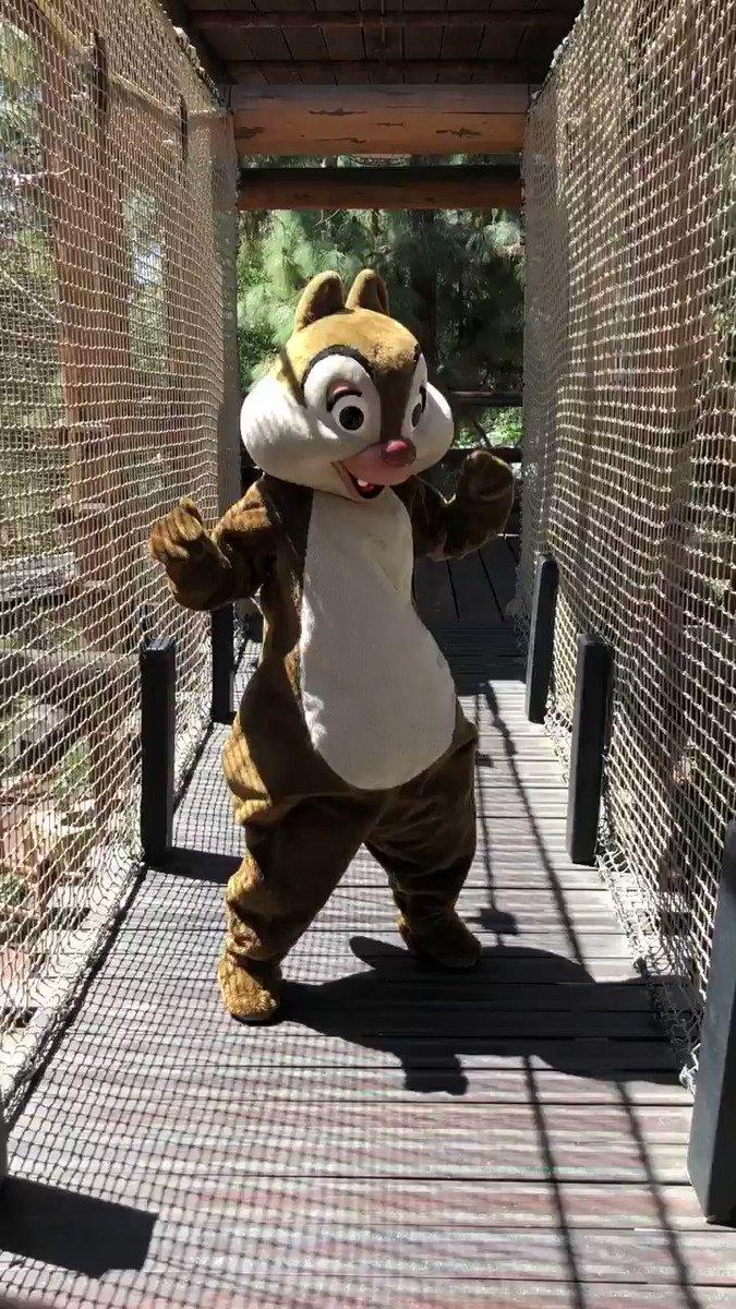 ある日 森の中               栗鼠さんに 出会った〜♬  自由に遊...