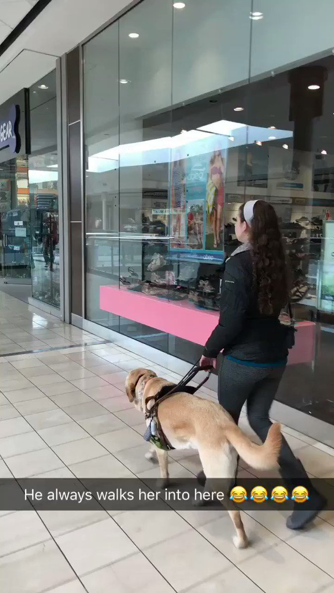 My sisters guide dog always sneakily walks her into this store without her knowing ���� I love dogs, man https://t.co/UuE9wDN4md