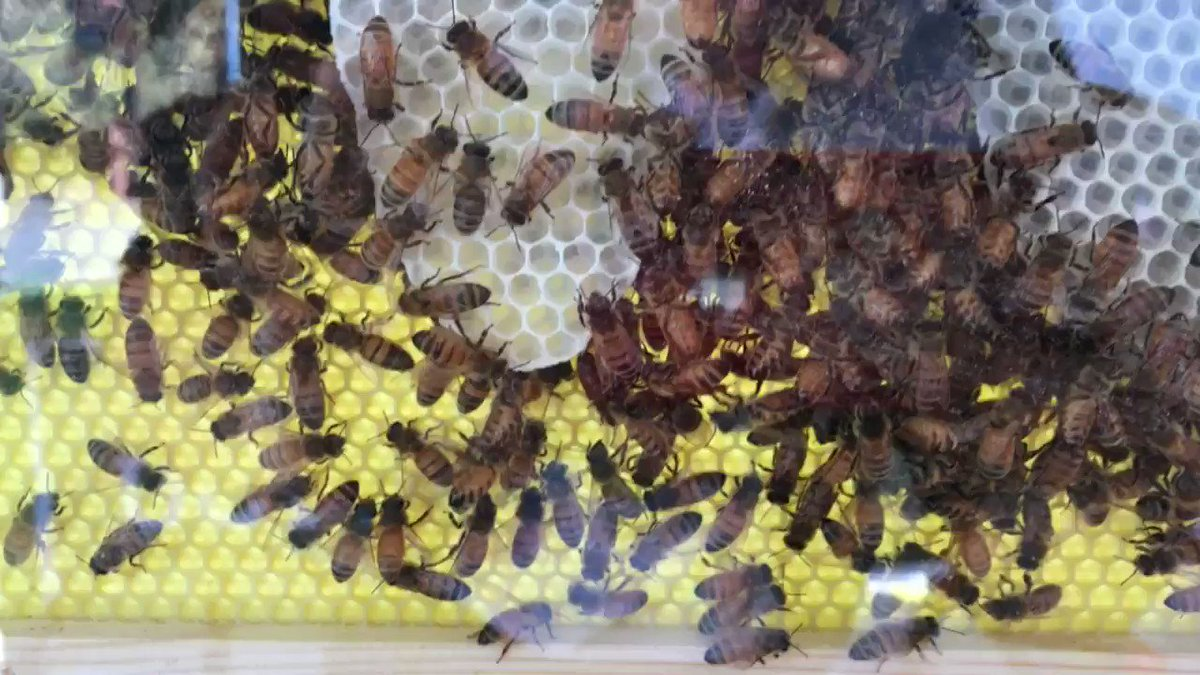 Image for the Tweet beginning: We're getting busy with bees