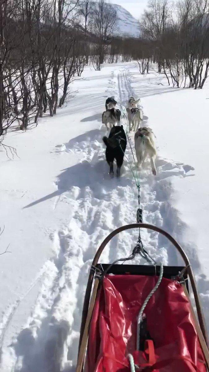 Jeff Bezos On Twitter Dog Sledding Above The Arctic Circle In