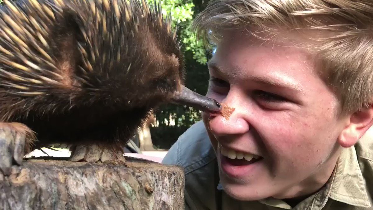 Afternoon echidna kisses @AustraliaZoo 🌿