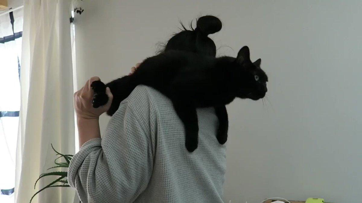ネコにビブラートをかける