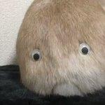 スーモは実在した!?うさぎのお尻に目玉を付けると完全に別の生物になる!