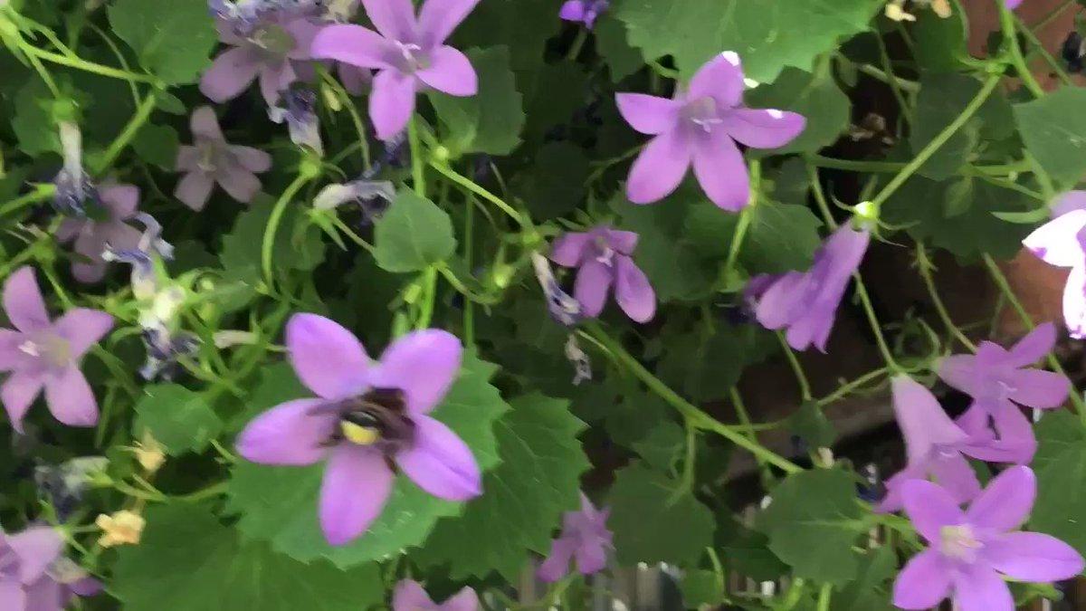 Tolles #Pfingstwetter in #Duisburg,☀️und der fleißigen kleinen  #Biene schmeckt es anscheinend richtig gut🐝🌸. Genießt das herrliche Wetter und habt schöne #Pfingsten!