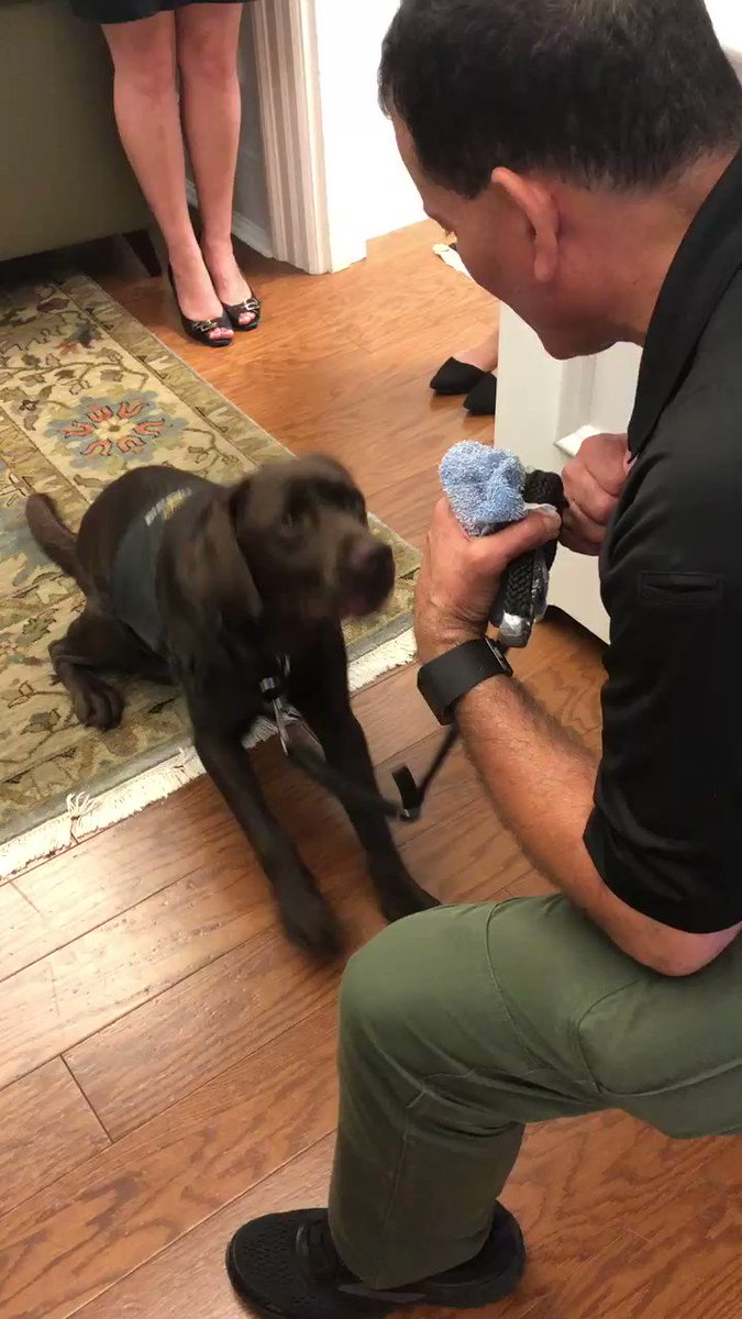 We had a friendly canine visitor come by the office today – wonderful to meet @UNCPolice's new crisis response dog, Franklin! He is two years old & in training for the upcoming academic year! https://t.co/BvaWOMqEjf