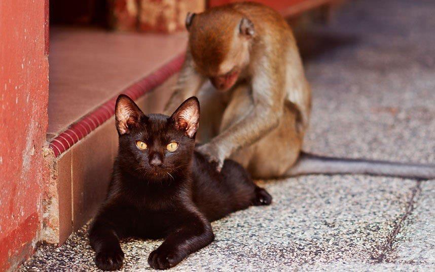 Солнца, котенок с обезьянкой картинки